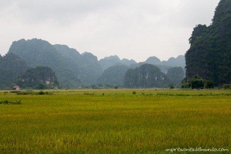 montañas-con-vegetacion-2-Vietnam-impresiones-del-mundo