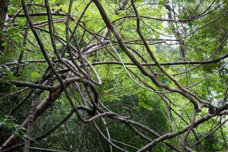 arboles-enredados-Don-Det-4000-islas-impresiones-del-mundo