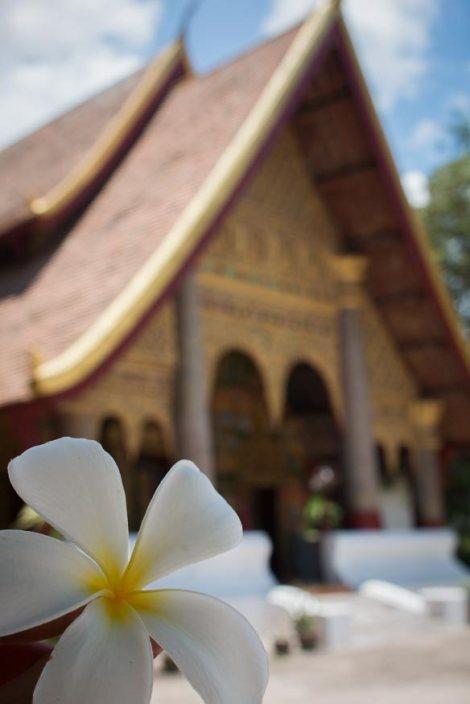 flor-y-pagoda-luang-prabang-impresiones-del-mundo
