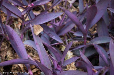 mariposa-luang-prabang-impresiones-del-mundo