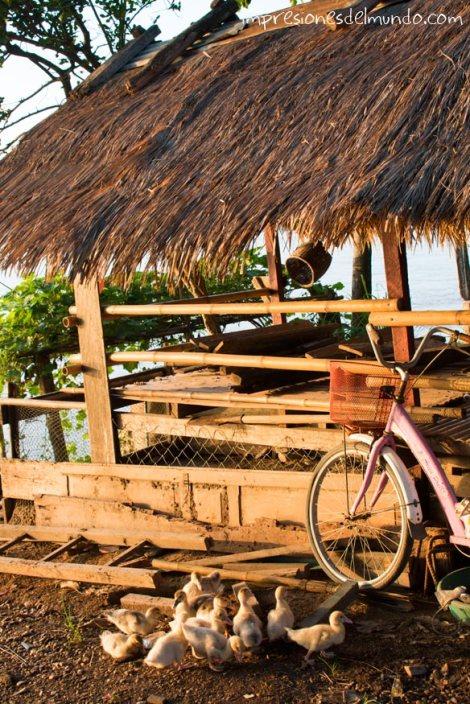 patos-y-atardecer-Don-Khong-4000-islas-impresiones-del-mundo