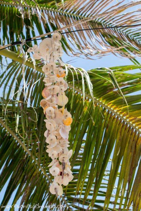conchas-de-playa-en-Koh-Tao-Tailandia-impresiones-del-mundo