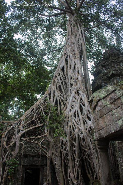 templo-y-naturaleza-2-Angkor-Wat-impresiones-del-mundo