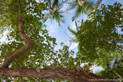 vista-de-arboles-desde-la-toalla-Koh-Tao-Tailandia-impresiones-del-mundo