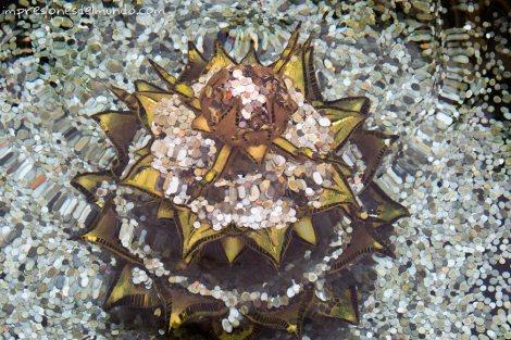 fuente-y-monedas-Wat-Rong-Khun-Chiang-Rai-Tailandia-impresiones-del-mundo