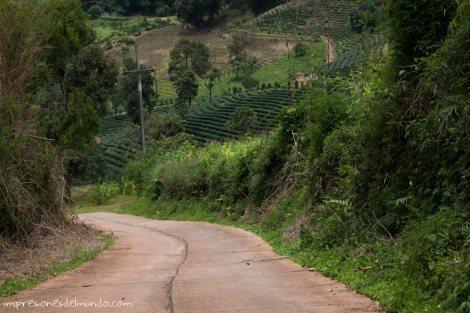 paisaje-y-cuesta-Mae-Salong-Tailandia-impresiones-del-mundo