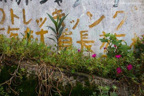 pared-y-flores-Mae-Salong-Tailandia-impresiones-del-mundo