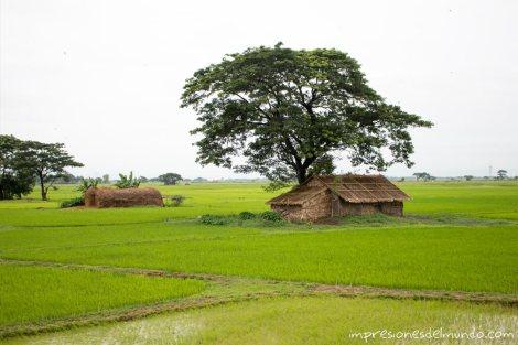 casa-y-arbol-Myanmar-impresiones-del-mundo