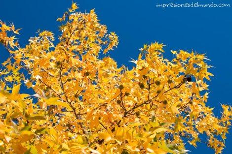arbol-amarillo-impresiones-del-mundo