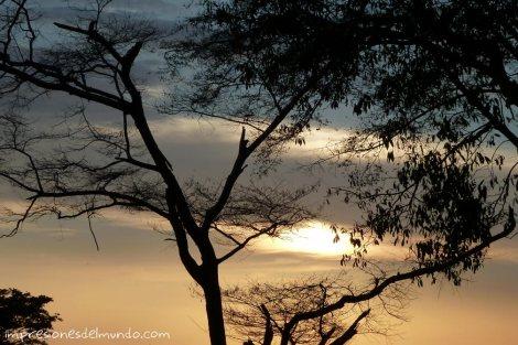 arbol-Uganda-impresiones-del-mundo