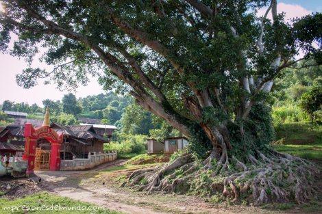 arbol-y-templo-Myanmar