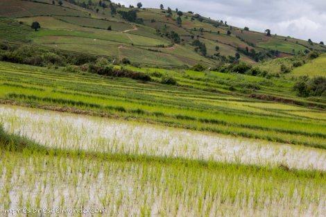 arrozal-Myanmar