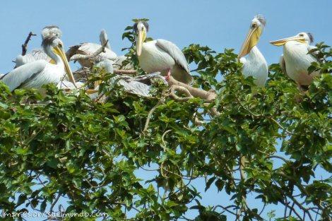 aves-en-el-arbol-Uganda-impresiones-del-mundo
