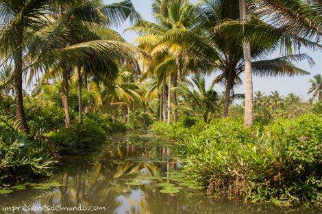 backwaters-India-impresiones-del-mundo