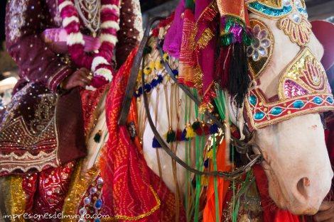 caballo-engalanado-India-impresiones-del-mundo