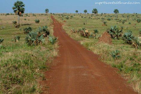 camino-de-safari-Uganda-impresiones-del-mundo