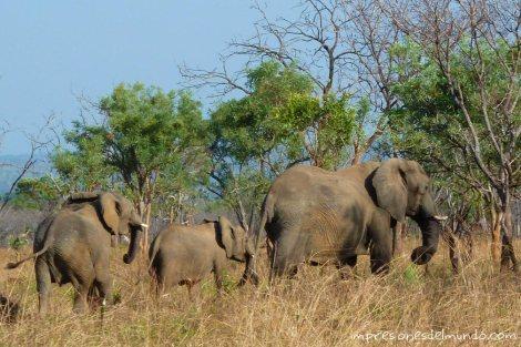 familia-de-elefantes-Uganda-impresiones-del-mundo