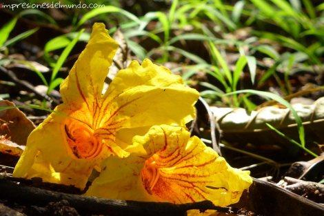 flores-impresiones-del-mundo