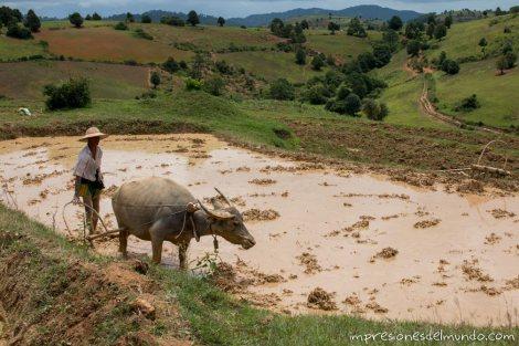 hombre-arando-Myanmar