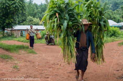 hombre-con-maiz-Myanmar