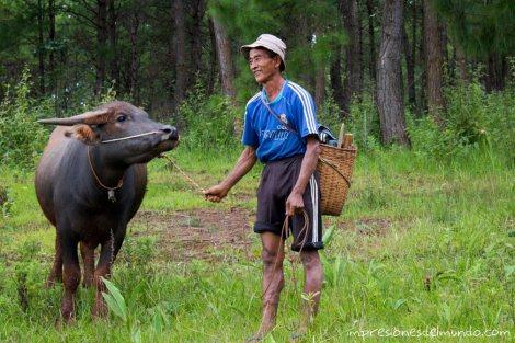 hombre-y-bufalo-Myanmar
