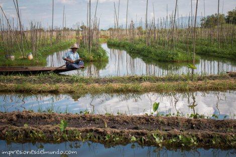 jardines-flotantes-Lago-Inle-Myanmar-impresiones-del-mundo