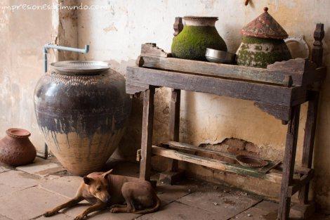 perro-y-vasijas-con-agua-Bagan-Myanmar-impresiones-del-mundo