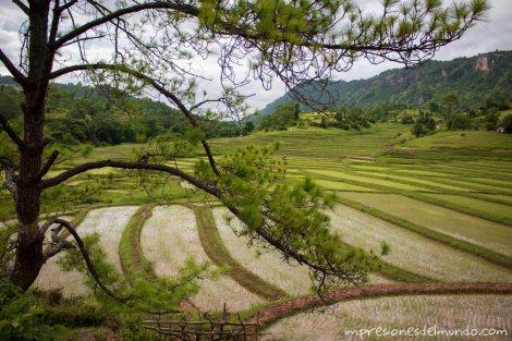 plantacion-de-arroz-Myanmar