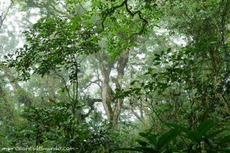 selva-Uganda-impresiones-del-mundo