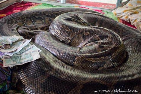 serpiente-gigante-Bago-Myanmar-impresiones-del-mundo