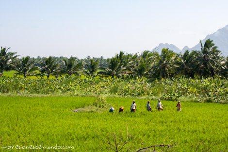 paisaje-y-trabajadores-India-impresiones-del-mundo