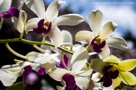 Flores-Cabrera-Republica-Dominicana-impresiones-del-mundo