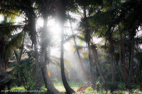 Palmeras-Cabrera-Republica-Dominicana-impresiones-del-mundo