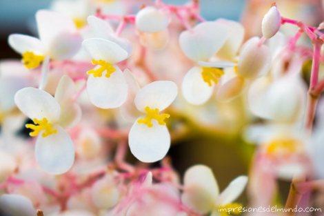 flores-Jarabacoa-republica-dominicana-impresiones-del-mundo