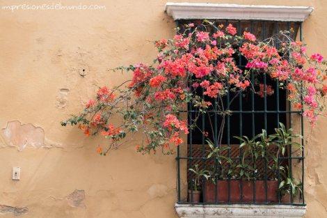 ventana-y-trinitaria-Santo-Domingo-impresiones-del-mundo