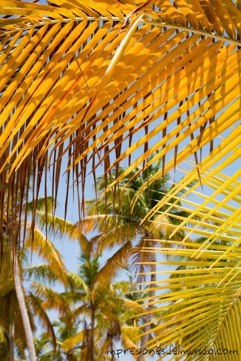 Cayo-Levantado-palmeras-Samana-republica-dominicana