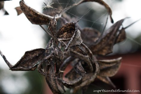 flores-secas-jarabacoa-impresiones-del-mundo
