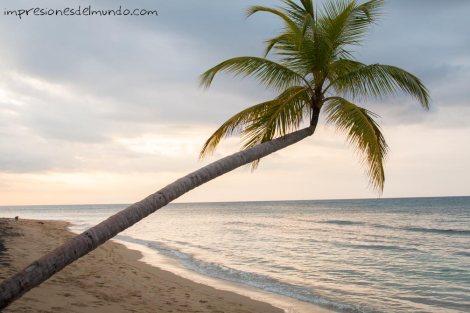 palmera-Samana-republica-dominicana