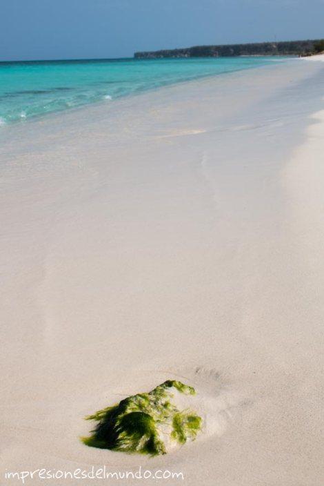 bahia-de-las-aguilas-4-republica-dominicana-impresiones-del-mundo