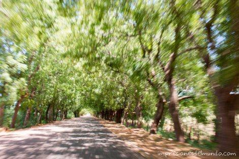 carretera-arbolada-hacia-bahia-de-las-aguilas-republica-dominicana-impresiones-del-mundo