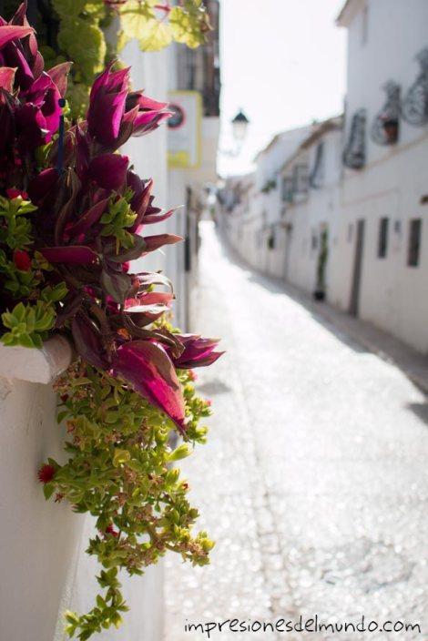 flores-ventana-y-calle-altea-impresiones-del-mundo