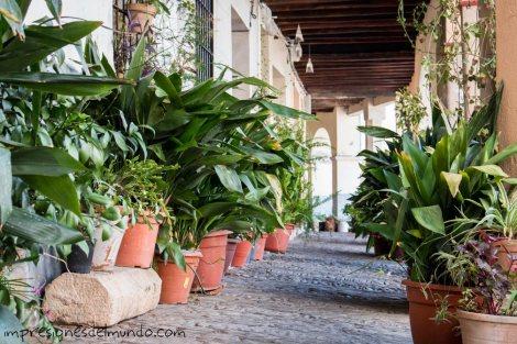 plantas-y-calle-guadalupe-impresiones-del-mundo