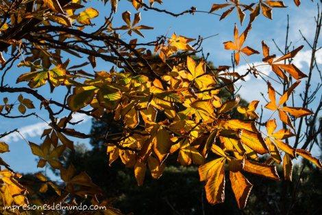 arbol-amarillo-parque-Retiro-madrid-impresiones-del-mundo