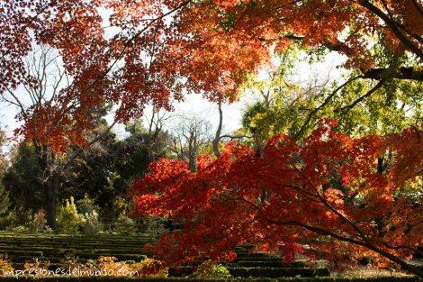 arbol-de-japon-jardin-botanico-madrid-impresiones-del-mundo