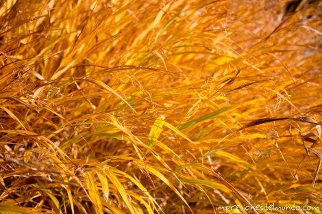 arbusto-amarillo-jardin-botanico-madrid-impresiones-del-mundo