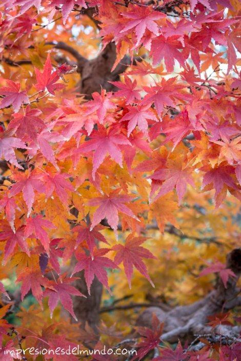 bonsais-jardin-botanico-madrid-impresiones-del-mundo