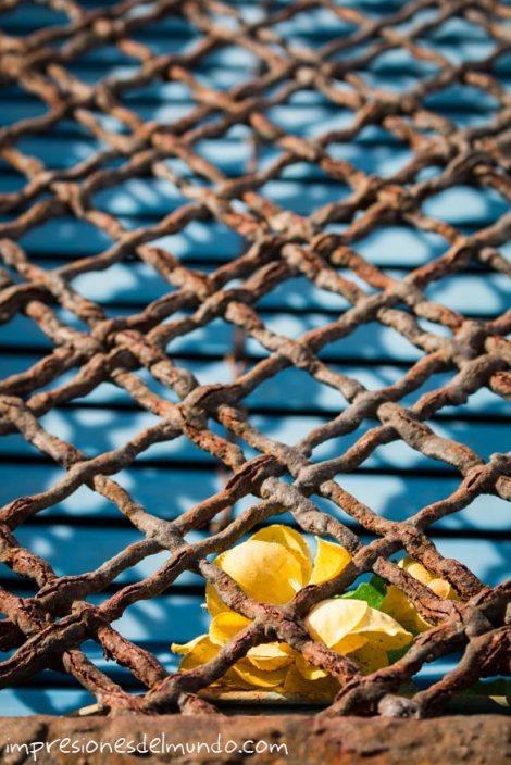 flor-en-ventana-oxidada-Peñíscola-impresiones-del-mundo