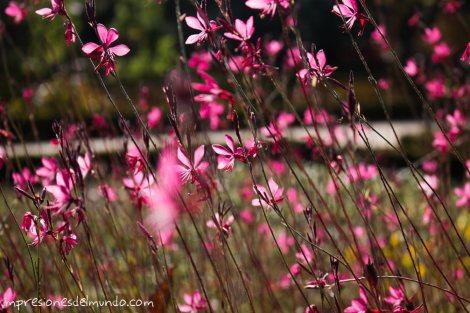 flores-rosas-jardin-botanico-madrid-impresiones-del-mundo