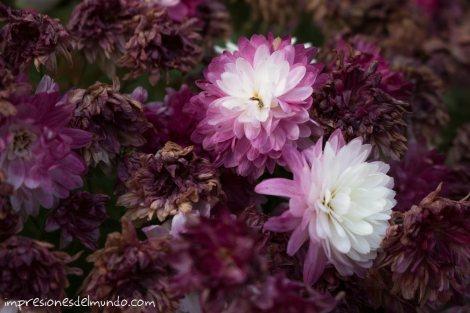 flores-rosas-y-blancas-jardin-botanico-madrid-impresiones-del-mundo