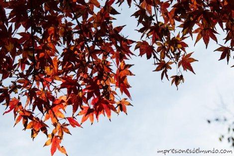 hojas-arbol-rojo-jardin-botanico-madrid-impresiones-del-mundo